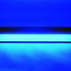 La mutación inducida por la luz ultravioleta favorece la aparición de tumores malignos de la piel